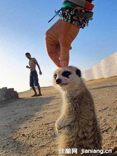 边吃边指着墙上的各种动物标本向大家讲解着它们的