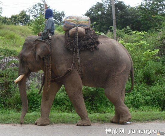 反对交易濒临绝种的野生动物
