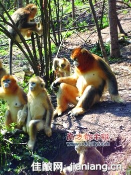 """""""华中屋脊""""神农架:国家级森林及野生动物自然保护区"""