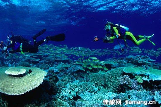 在珊瑚之上的潜水摄影师——昆士兰州,大堡礁 潜水或潜泳 穿戴上潜水所需的装备,潜入水底,是仔细欣赏炫目的珊瑚、海龟、鳐鱼、鲨鱼和热带鱼的最好方式,你可以看到它们身上的每一种颜色。尽管在一些岛屿周围有非常美丽的珊瑚礁,但是潜水的基础条件是需要有船随身相伴。 乘船游览 从海岸以及岛屿上的一些旅游景点出发开启一日游,通常需停留在两至三个不同景点,并包含大约3个小时的水下时间。全天游览的费用为200美元左右,包括午餐、小吃和潜水换气设备,并且可以附选轻便潜水。 船上旅游 如果你想多次潜水