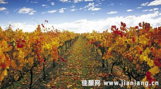 解析澳大利亞葡萄酒的成功之路