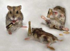 一分钟教你喝酒不醉
