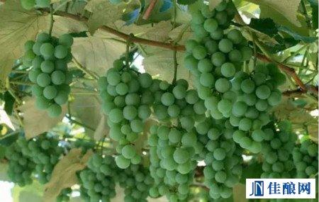 """""""联合国气候变化大会""""将如何影响未来葡萄酒行业格局"""