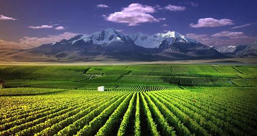 宁夏葡萄酒融入世界竞风流