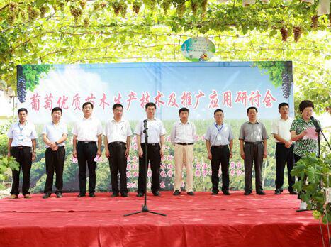 11位顶级专家问诊中国葡萄苗木生产技术