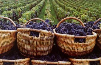 新西兰蜂蜜和葡萄酒对华出口将面临新的规定