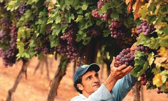 涨价前奏?世界葡萄酒产量今年将降至四年来新低