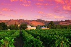 爱上葡萄酒 品味艺术感的澳大利亚