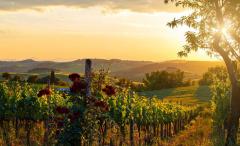 作为红葡萄酒爱好者 怎能错过这些产区的