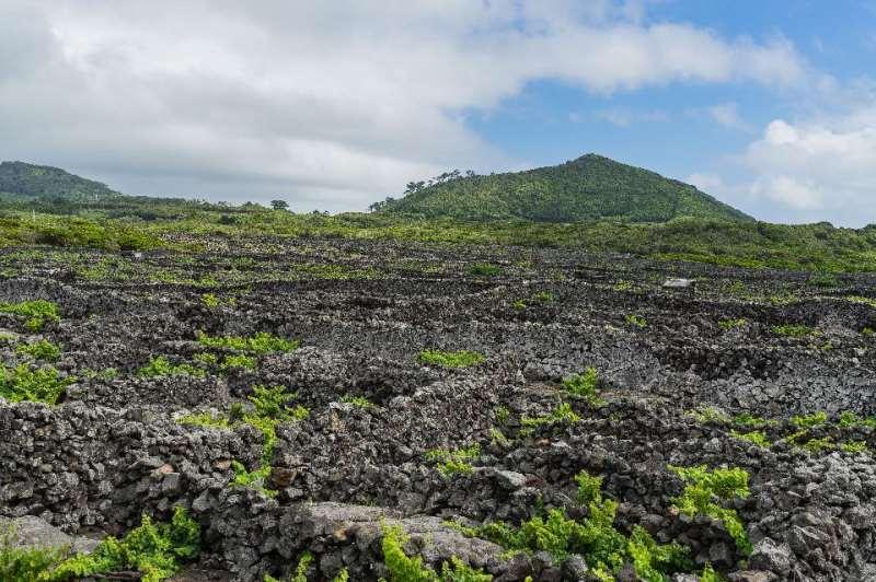 葡萄酒之岛皮科――大西洋中的璀璨明珠