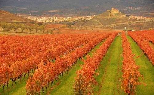 西班牙六大顶级葡萄酒产区