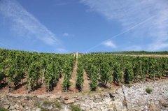 法国著名葡萄酒产区罗