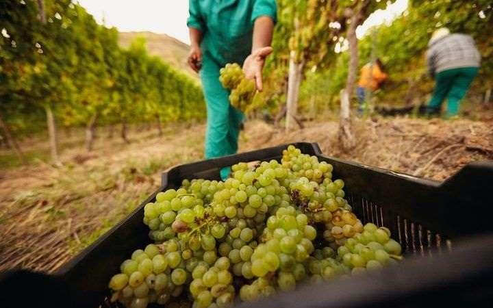 2017年新西兰葡萄酒出口额再创新高