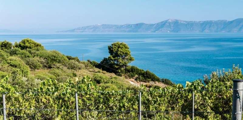 涨知识!论江河湖海对葡萄酒的影响