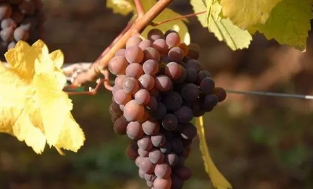 勃艮第:法国葡萄酒真正的浪漫圣地