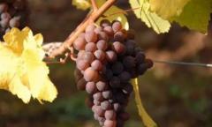 除了纳帕谷、波尔多 这些葡萄酒旅游产区