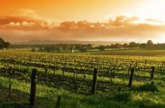 这18大葡萄酒最美产区
