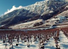 世界上最冷葡萄酒产区排名
