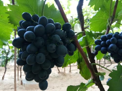 你知道酒标上标产区和标葡萄品种有何区别吗?