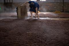 中国白酒的原料种植文化――高粱酿酒史